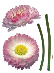 Sticker decorativ 17023 Daisy